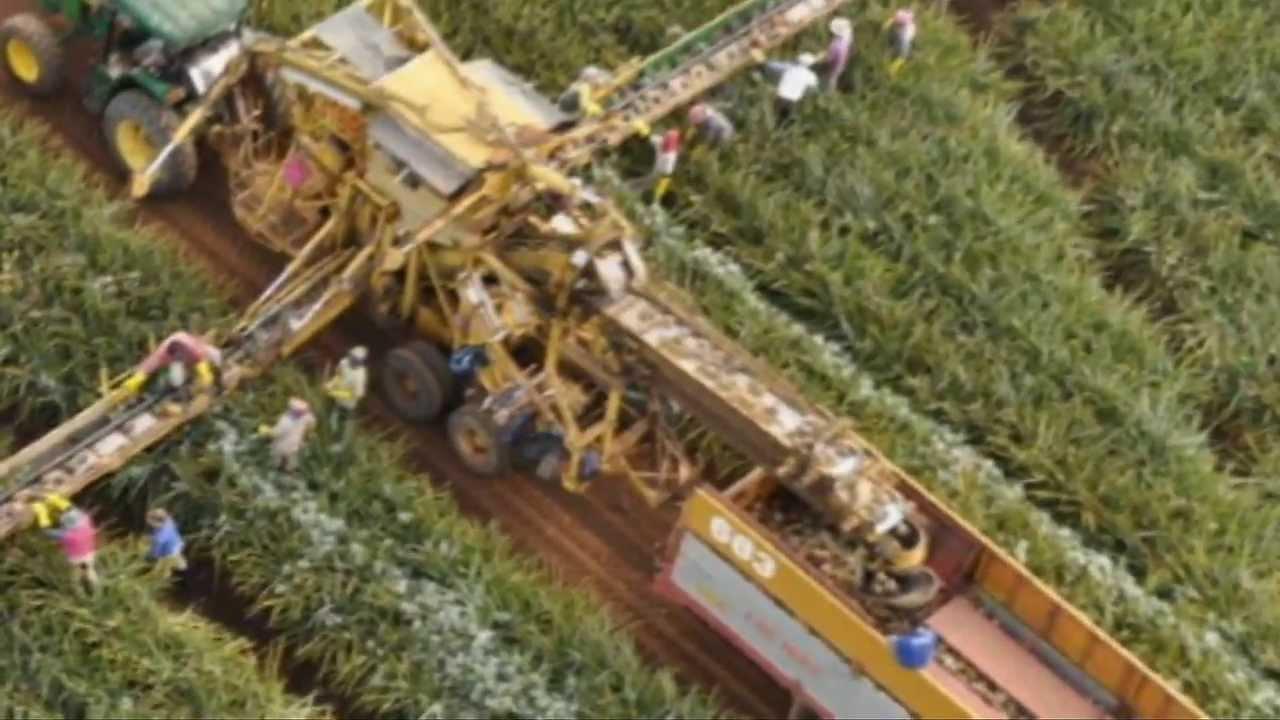 DIE PHILIPPINEN IM VIDEO - Die Ananasplantagen von Del Monte in Bukidnon, in Camp Philips - einst und heute