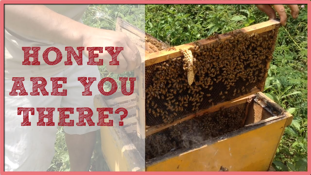 Die Philippinen im Video - Ist da Honig? Imkerei in Bukidnon