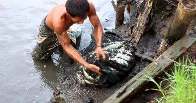 Die Philippinen im Video - Fischernte aus dem Teich