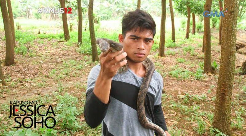 Die Philippinen im Video - King Cobra Jäger von Compostela