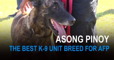 Die Philippinen im Video - Asong Pinoy - beste K-9 Hunderasse für die Streitkräfte