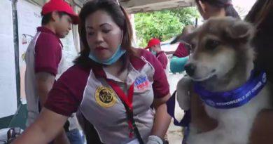 Die Philippinen im Video - Tollwut - Die Philippinen reagieren