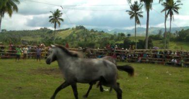 Die Philippinen im Video - Die Tradtition des Pferdekampfes wird trotz Verbotes in den südlichen Philippinen auf der Insel Mindanao fortgeführt