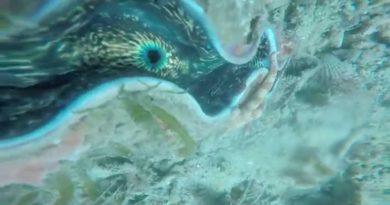 Die Philippinen im Video - Riesenmuscheln