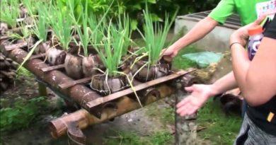Die Philippinen im Video - Eine Bio-Farm in Maribojo auf der Insel Bohol