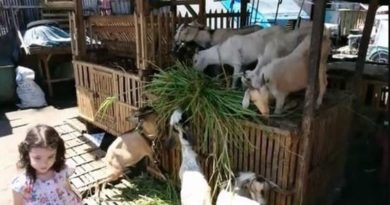 Die Philippinen im Video - Auf dem Tiermarkt in Iligan