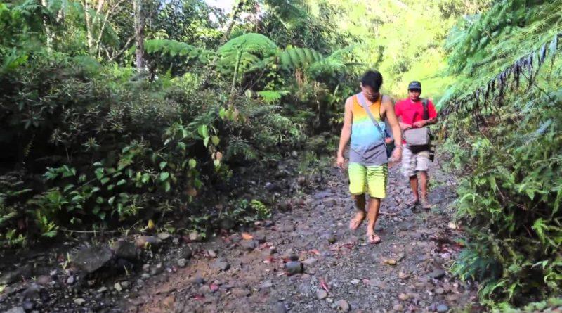 Die Philippinen im Video - Im Bonsai Wald am Berg Dinapigue in der Provinz Isabela
