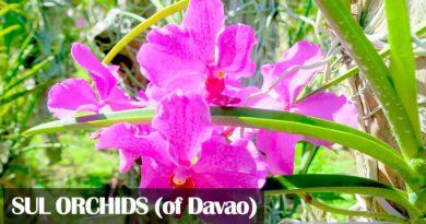 Die Philippinen im Video - Herrliche Orchideen von SUL aus der Stadt Davao