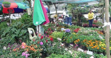 Die Philippinen im Video - Blumenverkauf auf der Strasse in Tagaytay