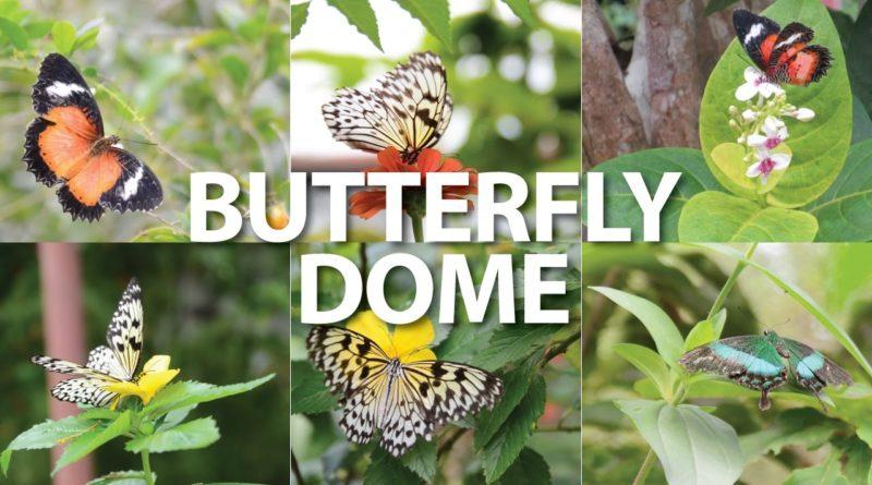 Die Philippinen im Video - Ein Besuch auf der Schmetterlingsfarm Butterly Dome in Sagbayan Peak auf der Insel Bohol