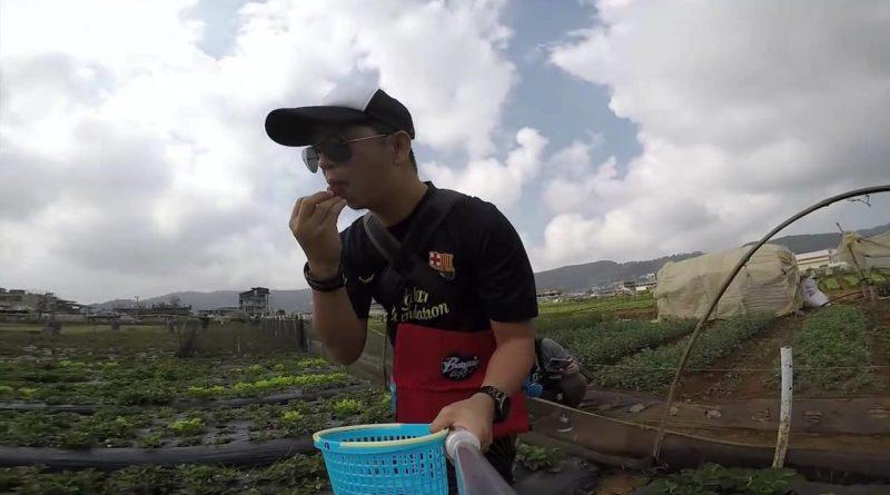 Die Philippinen im Video - Zum Erdbeeren selber pflücken auf die Erdbeerfarm in La Trinidad
