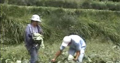 """Die Philippinen im Video - Das Lied der Igorot """"Komboy"""" über die Bergbauern"""