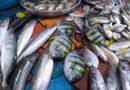 Die Philippinen im Video - Fisch einkaufen auf dem Fischmarkt von Tukuran in Zamboanga del Sur