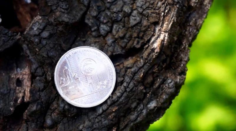 Die Philippinen im Video - Neue Münzen im März 2017