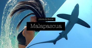 Die Philippinen im Video - Über und unter der Insel Malapascua mit den Fuchshaien