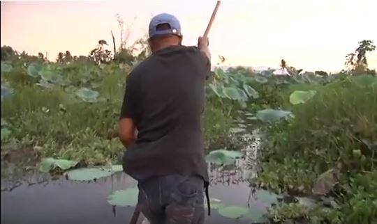 Die Philippinen im Video - Unterschiede machen in den Ligawasan Sümpfen