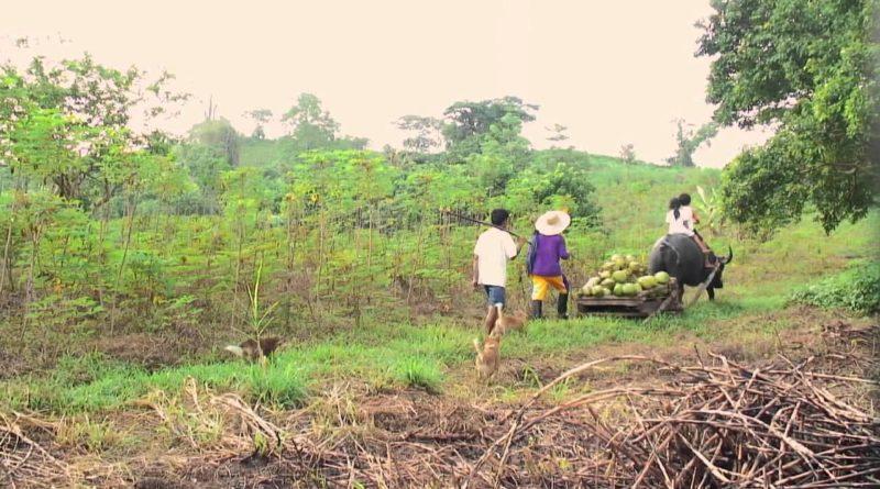 Die Philippinen im Video - Landfrauen und ihre Kraft und Wichtigkeit in der Gesellschaft