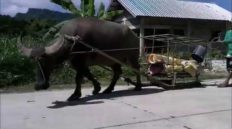 Die Philippinen im Video - Leben im Hinterland