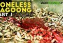 Die Philippinen im Video - Die Herstellung und Produktion von Bagoong, eine Fischpaste