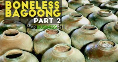 Die Philippinen im Video - Herstellung von Bagoong - Teil 2