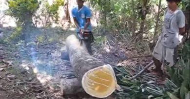 Die Philippinen im Video - Bauholz sägen auf philippinjsich