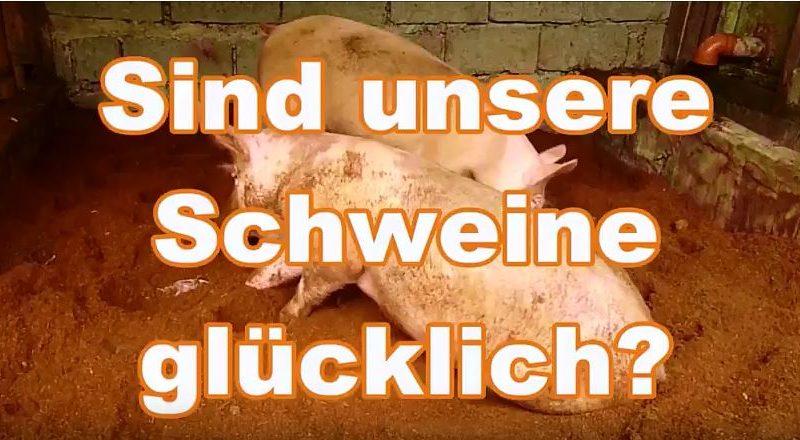 Die Philippinen im Video - Geruchs- und fliegenlose Schweinehaltung in den Philippinen Video: Dieter Sokoll