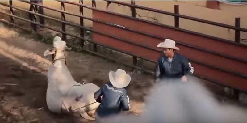 Die Philippinen im Video - Die Cowboys von Masbate