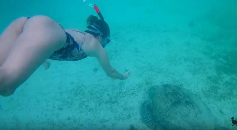 Die Philippinen im Video - Schwimmen mit Seeschildkröten in Port Barton