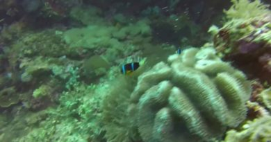 Die Philippinen im Video - Tauchen am Arco Point in Panglao am blauen Loch in der lebenden Wand