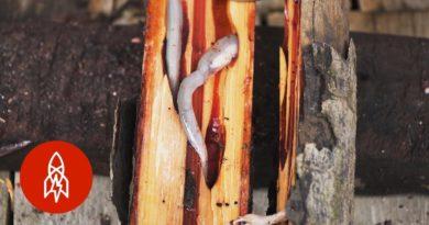 Die Philippinen im Video - Exotische Gerichte - Philippinische Holzwürmer