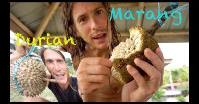 Die Philippinen im Video - Marang & Durian auf Samal essen