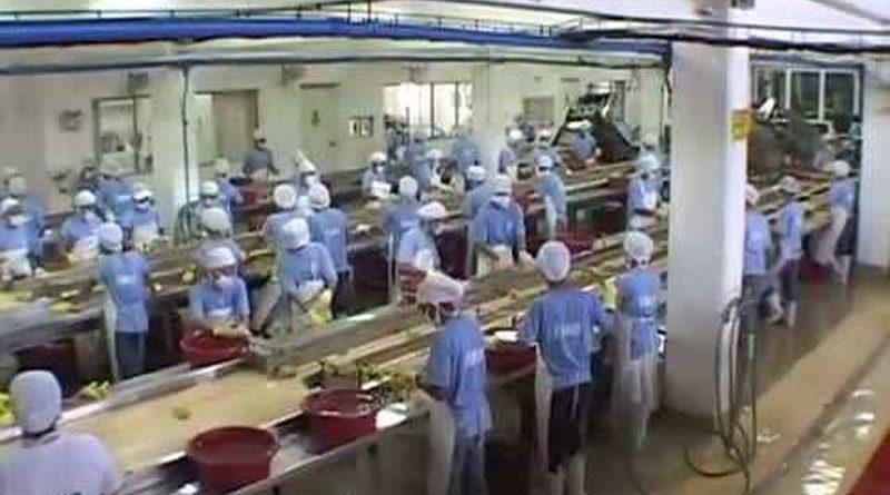 Die Philippinen im Video - Dörrobst und Saft aus Mangofrüchten