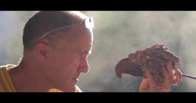 Die Philippinen im Video - Philippinen-Adler Skulptur aus Treibholz