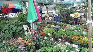 Die Philippinen im Video - Blumenhandel auf der Straße in Tagaytay