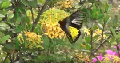 Die Philippinen im Video - Auf dem Land leben - Teil 33 - auf der Insel Cebu