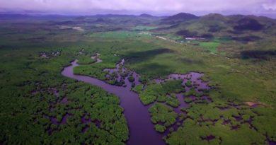 Die Philippinen im Video - Faszinierender Mangrovenwald auf Siargao