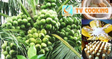 Die Philippinen im Video - Kokosnussernte und Kokosnussverarbeitung
