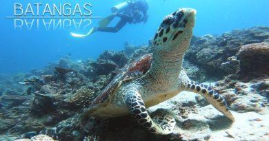 Die Philippinen im Video - Das reiche Meeresleben von Batangas