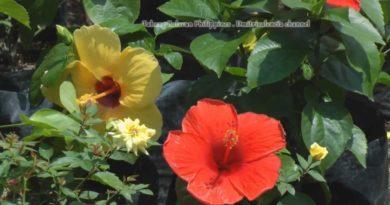 Die Philippinen im Video - Trip zum Gartencenter in Tabang