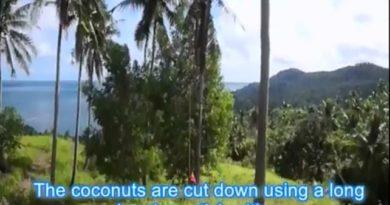 Die Philippinen im Video - Verarbeitung der Kokosnuss von der Ernte bis zum Verkauf von Kopra