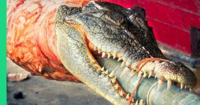 Die Philippinen im Video - Krokodil-Lechon im Krokodilpark von Davao