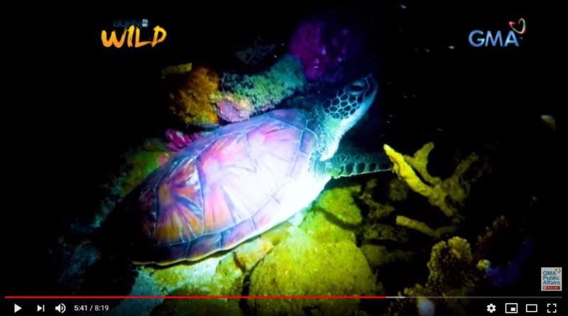 Seeschildkröte legt Eier unter Fischerhütte