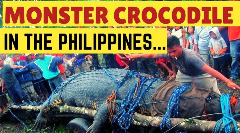Die Philippinen im Video - Monster-Krokodil der Philippinen - Die Geschichte des Krokodils Lolong