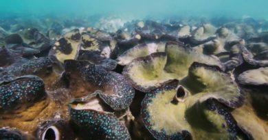 Die Philippinen im Video - Riesenmuscheln von Balinao