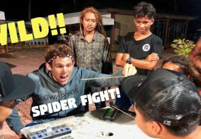 Die Philippinen im Video - Wilde Spinnenkämpfe in den Philippinen