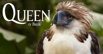 Die Philippinen im Video - Königin der Vögel - Der Philippinen Adler