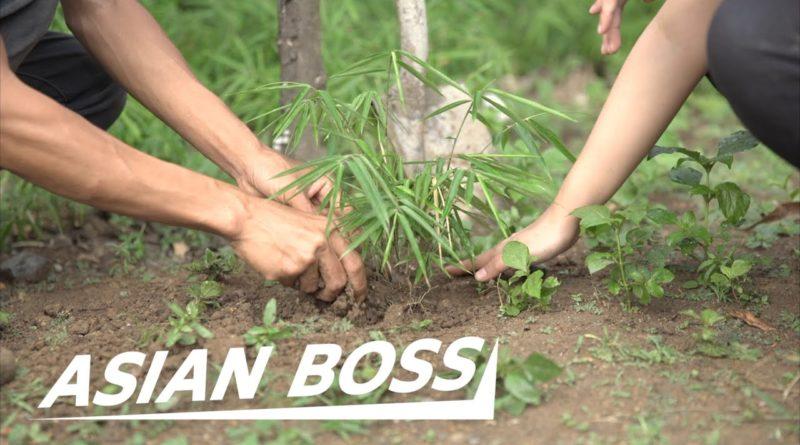 Das Pflanzen von 1 Milliarde Bambussetzlingen