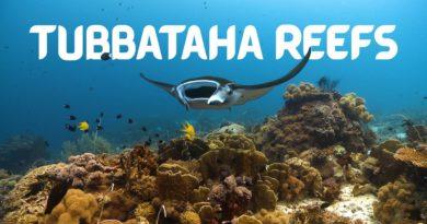 Die Philippinen im Video - Tubbataha Riff - Das Herz der philippinischen Meere