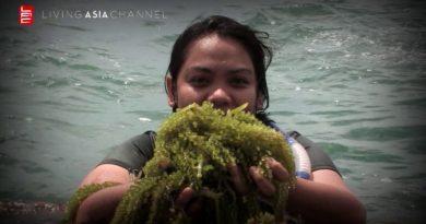 Die Philippinen im Video - Eine Reise nach Almasor