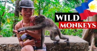 Die Philippinen im Video - Nicht nötig nach Bali zu reisen